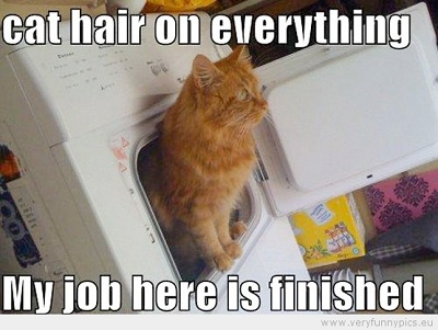 funny-picture-cat-hair-on-everything-my-job-here-is-finnished
